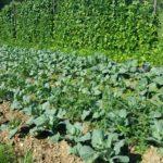 Kmetija Irbar (18)